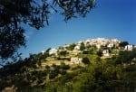 Hilltop Village and Olive Trees